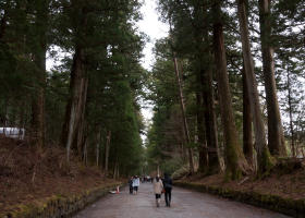Cedar Avenue of Nikko