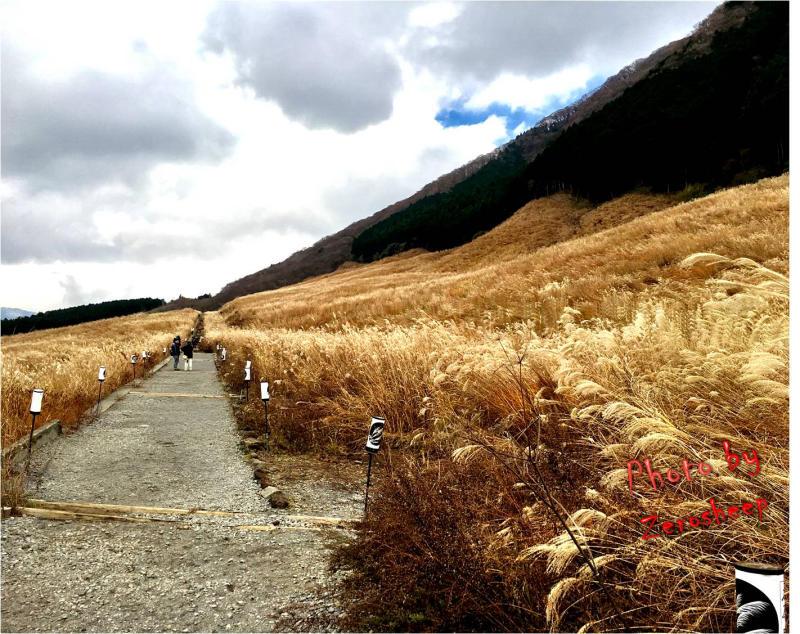 (秋季限定)強烈推薦 仙石草原 黃金色的ススキ草原