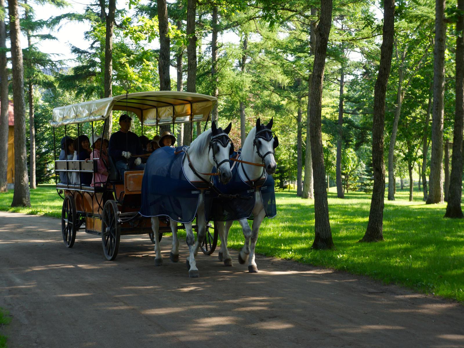 Northern Horse Park Travel Tips Odigo