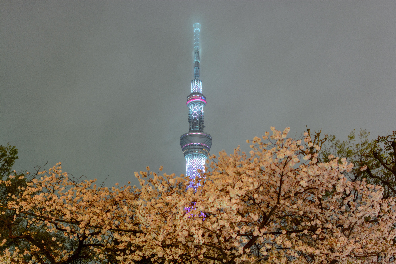 cherry blossom festival 2020 - HD2048×1365