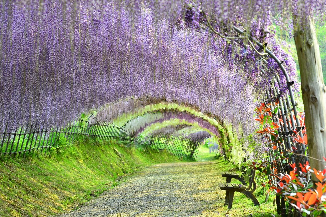 Wisteria Gardens Of Japan Tokyo Creative