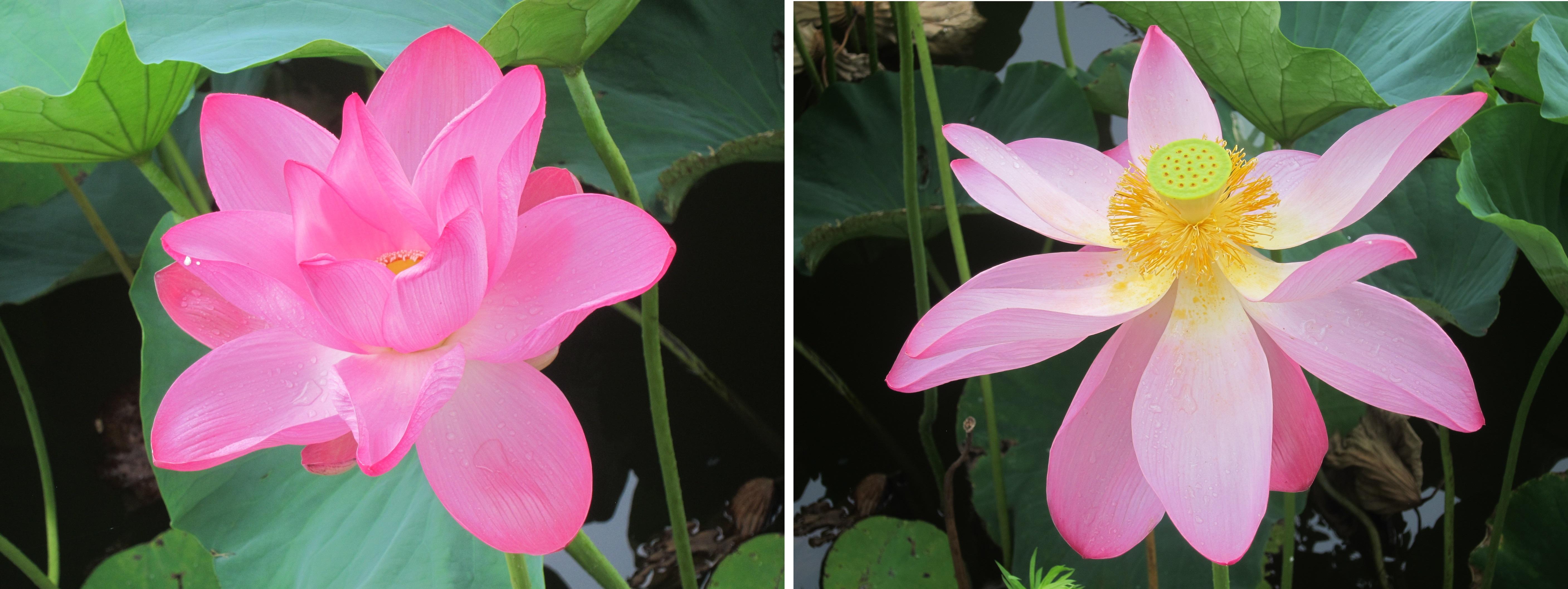 The Beauty Of Japan Seasonal Flowers Part 2 Odigo