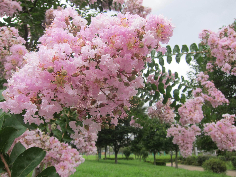 The Beauty Of Japan Seasonal Flowers Part 1 Tokyo Creative
